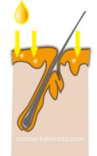 エッセンス模式図.jpg