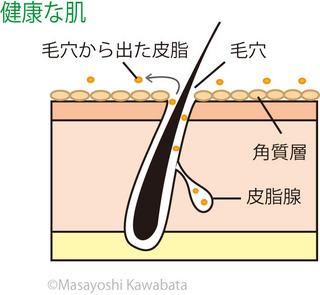 健康な皮膚.jpg