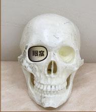頬骨と肝斑眼窩.jpg