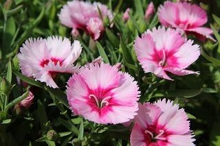 flowers-1358519_640.jpg