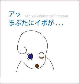menoibo2芦屋柿本.jpg