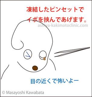 menoibo4芦屋柿本.jpg
