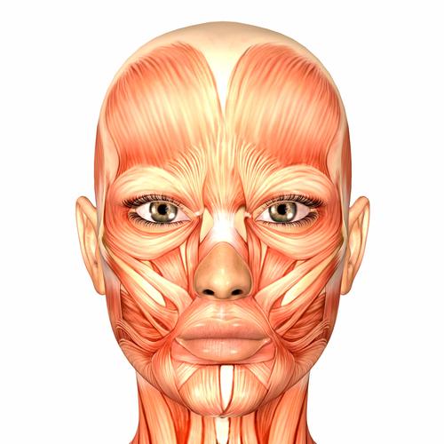 muscle face.jpg