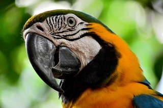 parrot-892940_640.jpg