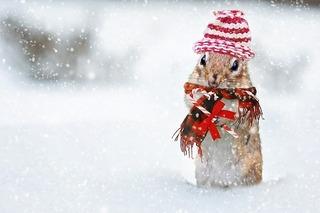 winter-2926825_640.jpg